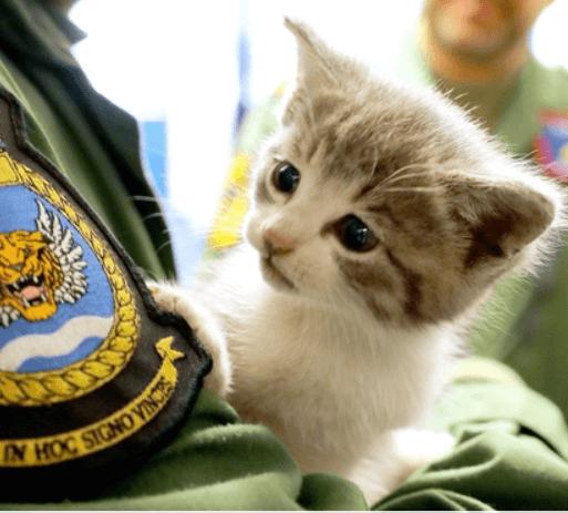 車のバンパーに隠れて483kmの距離を無傷で移動した子猫。到着した海軍基地で兵士たちのマスコットになった!