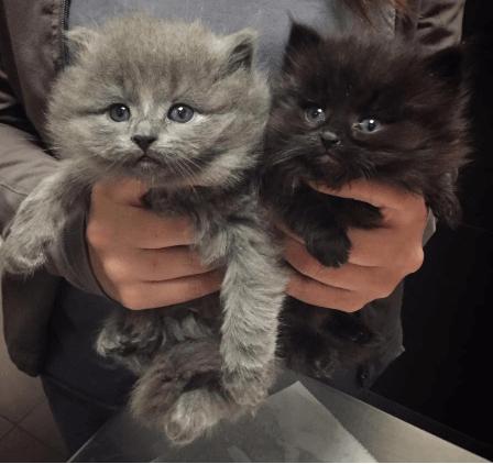 『この寒さにはきっと耐えられない・・・』母猫に置き去りにされ茂みの中に身を寄せ合っていた2匹の子猫