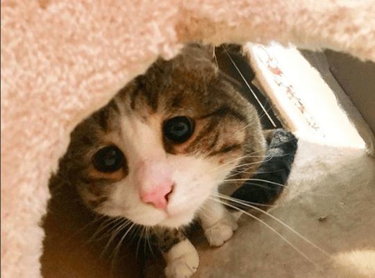 野生を捨てきれず、人に怯え物陰に隠れていた子猫。悲しそうなまなざしに魅かれたカップルが子猫を家族に迎えたら・・・