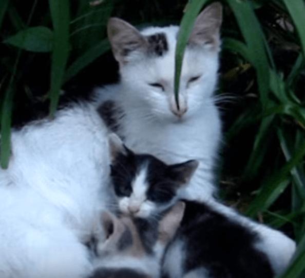 4匹の子猫を連れ男性に助けを求めてきた母猫。野良猫だった親子に安全で健康な暮らしを提供することを決めた数か月後。