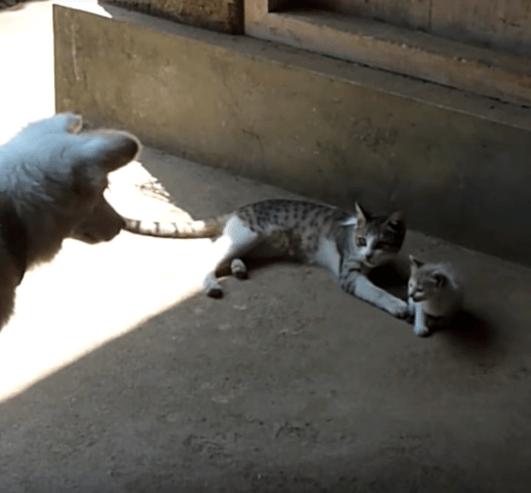 『やり過ぎだよ!』お兄ちゃんに羽交い絞めにされた子猫の味方をしたのに、子猫に威嚇されて立場を失くしちゃったワンちゃん