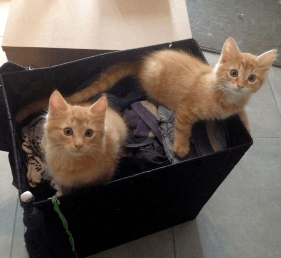 歩道の下に身を潜めていた兄弟の子猫を保護。人間を恐れて威嚇を続けた子猫たちに愛情を注いだ男性