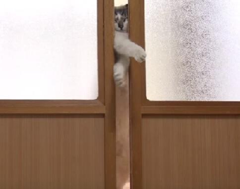 「開かないにゃ…ふぎゅう~~」引き戸をどうしても開けたい猫さん。渾身の力をこめた姿が豪快だった!