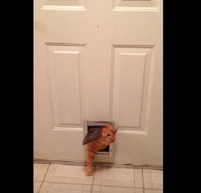 あらまあ!気の毒なほど狭い猫専用の入口から入ろうとするぽっちゃりにゃんこ(笑)
