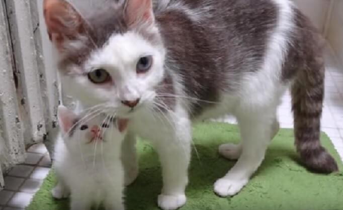 「もう大丈夫!今日から私がアナタのママよ」独りぼっちで施設に保護された子猫に我が子同様に愛情を注いだ母猫に感動!