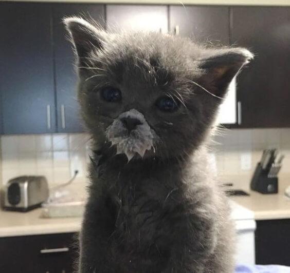 可愛すぎる!保護された子猫。優しい夫婦に引き取られご飯を食べる練習をしていたら大変なことになっちゃった!