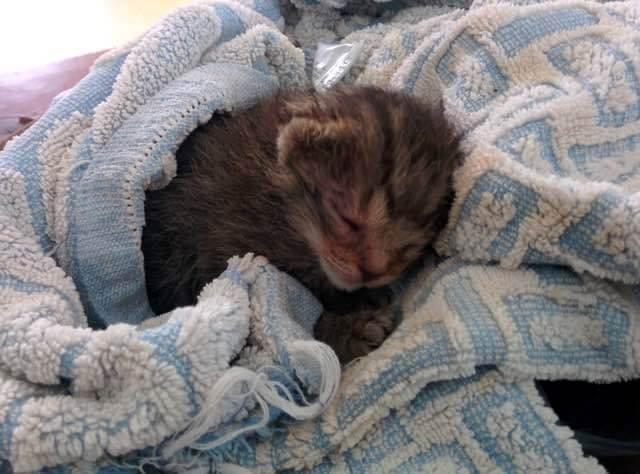 何者かによって顔を強打され瀕死の状態だった子猫。保護されてやがて美しい猫になった…