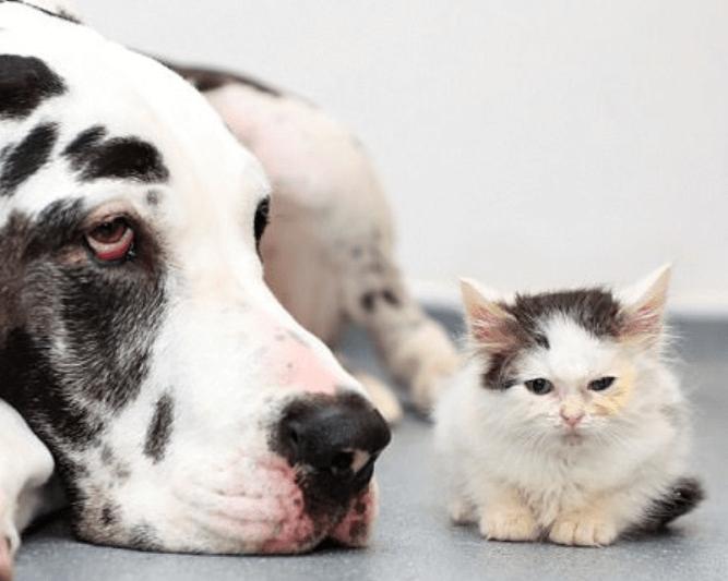保護された小屋の下で生まれた4匹の子猫。重度の感染症に苦しむ子猫たちを救ったグレート・デーンの血液