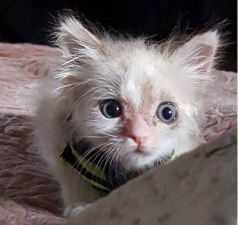 シェルターに犬を引き取りに行った保護施設のスタッフが、一緒に引き取ることを決めた感染症に苦しむ子猫