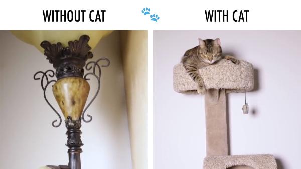 「あるある」ってついつい言いたくなる!?猫が居る生活と居ない生活を比較してみた♪