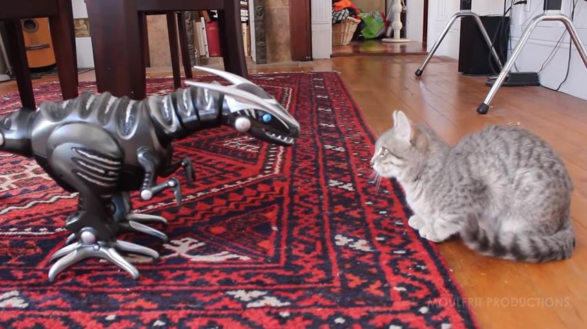 思わず笑っちゃう♪恐竜ロボへの反応が可愛すぎる猫♡