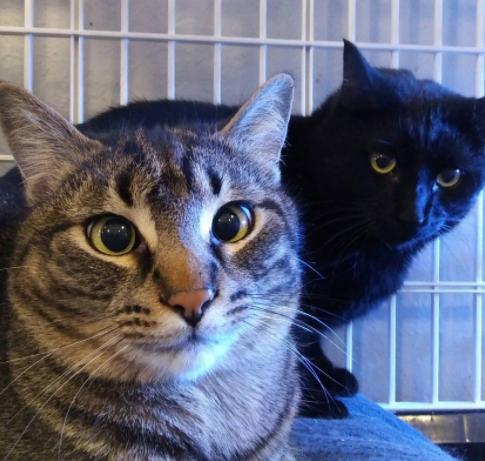 保護されて3週間後に新しい家へ旅立った、氷点下のトレーラーパークで寄り添って暮らす2匹の捨てられた猫