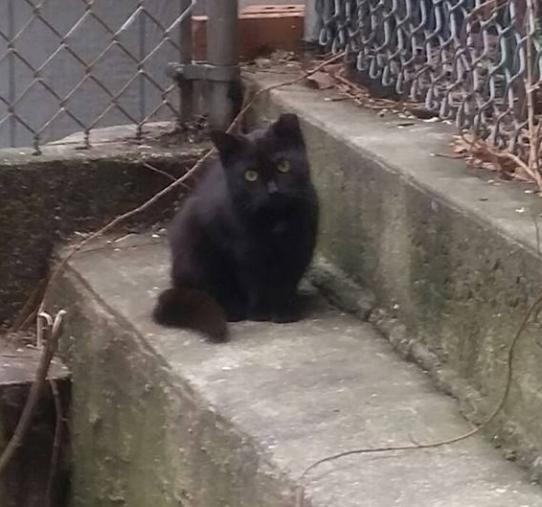 保護活動をする男性が近所で見つけたひとりぼっちの子猫。警戒心が強く近付けなかった子猫と彼の2年後・・・