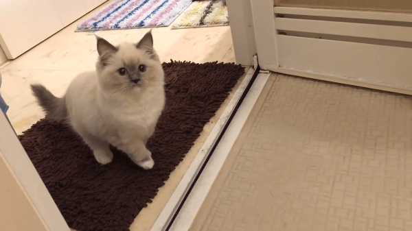 子猫がお風呂場におそるおそる侵入!?迷う姿がかわいすぎる♡