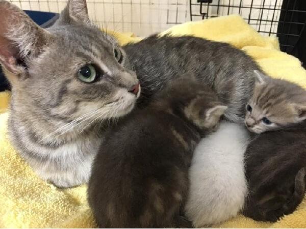 空き家の地下室で発見された猫の親子。心優しい人たちに保護された子猫たちは逃げた母猫と再会するともう大喜び♡