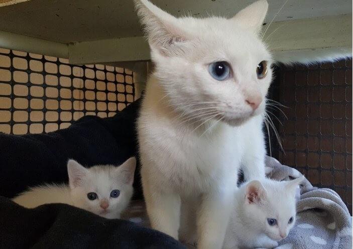 動物病院の裏で保護された野良猫の親子。その美しい姿と神秘的な瞳が出会う人みんなを幸せに♡
