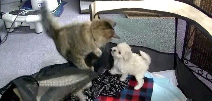 こっそり?!子犬の脱走を助けるにゃんこ。その鮮やかなテクニックに唖然!!