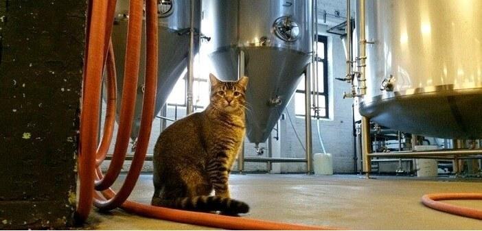 猫たちが大活躍!シカゴのビール醸造所がネズミたちの憩いの場になり廃業寸前に!その危機を救ったのは4匹の保護猫たちだった…