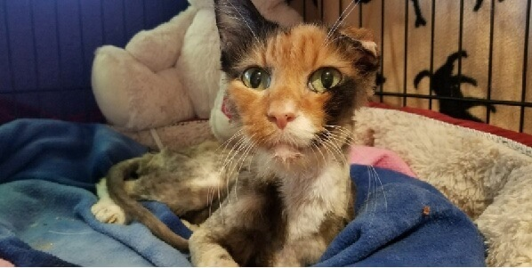 劣悪な環境で暮らしていたためガリガリにやせ細り衰弱していた14歳の猫。猫はたった4ヶ月で奇跡的な回復をみせた!