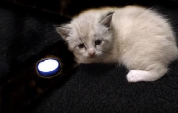 落ち葉の中から転がり出てきたひとりぼっちの子猫。猫好きの女性と出会ったことから生活が一変する!