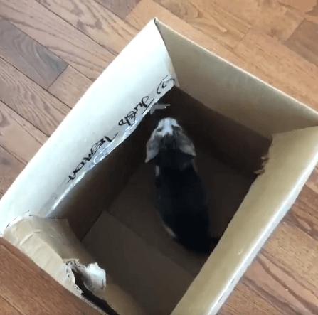 郵便配達の女性が段ボール箱で届けた子猫。通りを走っていた子猫は兄弟と再会、新しい家族のもとで暮らし始めた