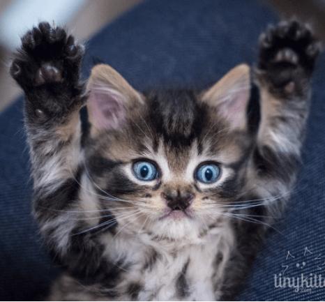 妊娠中に捨てられた猫から生まれた6匹の子猫。先天的な障害を持って生まれた子猫の鼻には蝶々がいる?