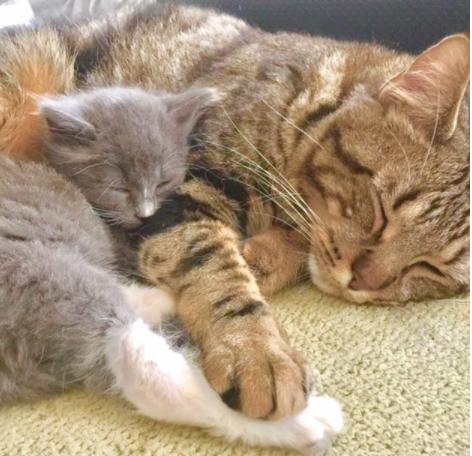 瀕死の状態で保護した子猫を連れて帰ったら、同じ境遇から救われた先輩猫がぴったりと寄り添ってくれた・・・