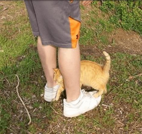 猫好きな私ではなく、猫が苦手なボーイフレンドの足にスリスリと甘えてきた高速道路の側で見つけた妊娠中の野良猫