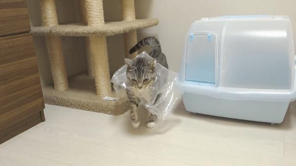 緩衝材から頭が抜けない(汗)助けに入った姉妹猫がとった行動は?