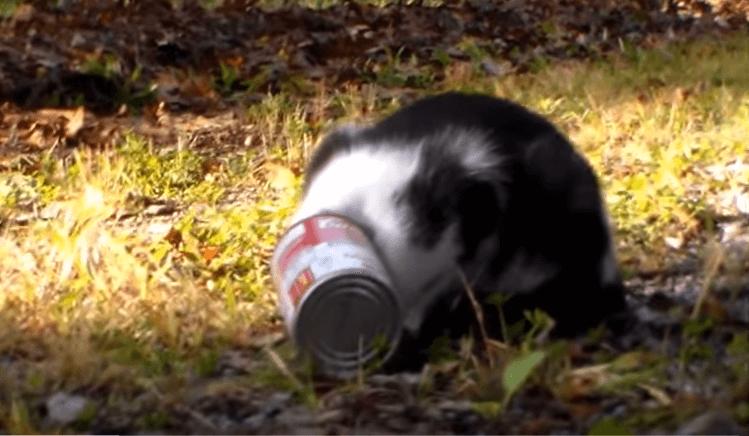 大丈夫なの!?缶が頭にはまってしまった子猫を一生懸命助ける!!!