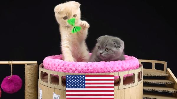 子猫にぴったり♪手作りの段ボールキャットタワーが可愛い♡