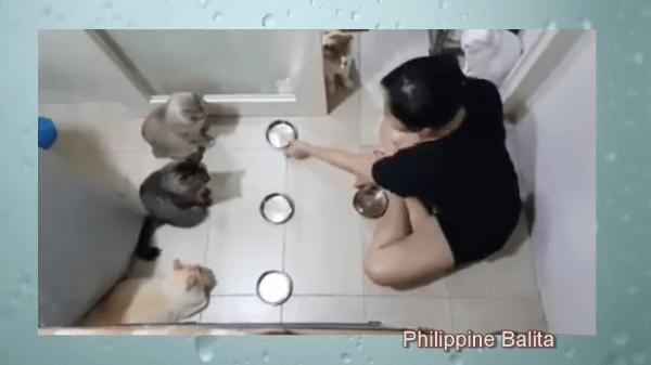 餌を目の前にしても食べるのを我慢している猫たち!その理由とは・・・!?
