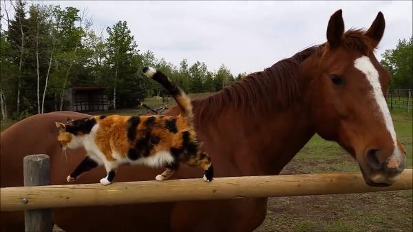 絶対誘ってる(笑)馬に誘われて背中に飛び乗った猫さん♡