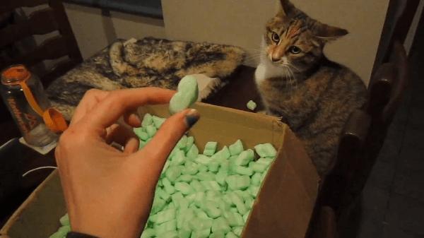 地味だけど可愛い(笑)緩衝材で遊びたいけどビクビクする猫さん!!!