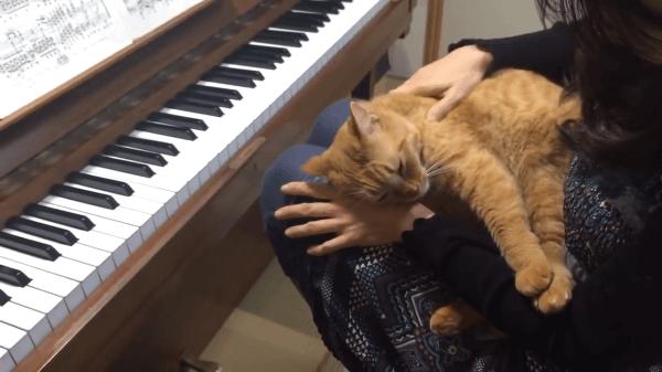 全然弾けない(笑)ピアノの練習をジャマしにやってくる猫ちゃん♡