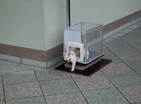どういう仕組み!?猫用エレベーターが凄すぎるッ!!!