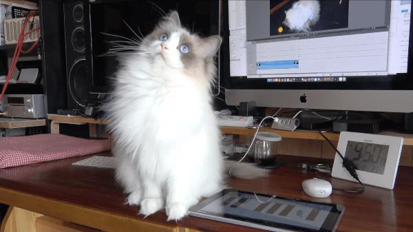 ご機嫌ナナメ!?猫用アプリで遊んであげようとしたら・・・
