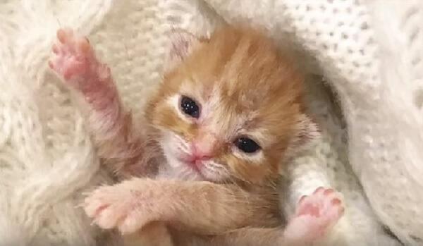 生後4日ほどで80gしかなく、ティッシュボックスに入れられペットショップへ持ち込まれた子猫。降りかかる病気と戦った結果…