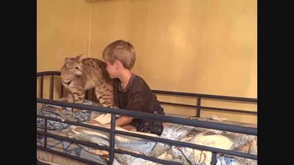 「起きてにゃぁぁん!」大好きな飼い主の男の子を起こしに行く猫さん♡