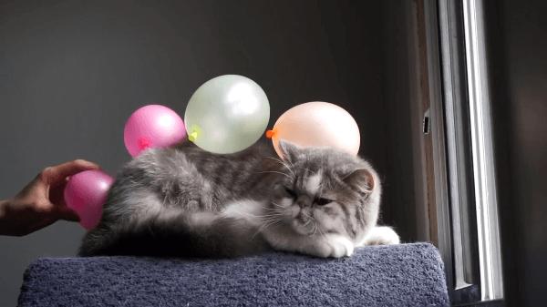 嫌じゃないの!?風船をくっつけられる猫が可愛すぎるっ♡