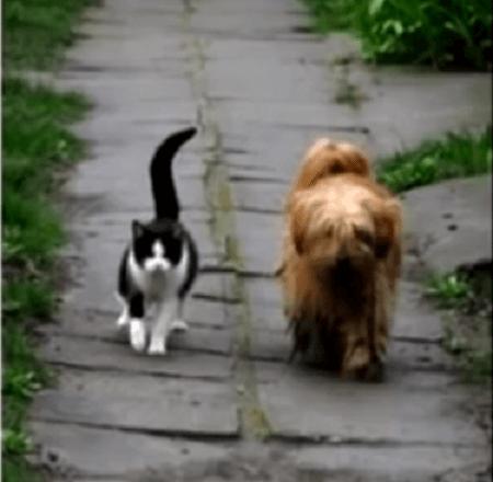 6枚の写真が語る友情。エストニアの小さな路地で毎日散歩を楽しむ2匹がいました。