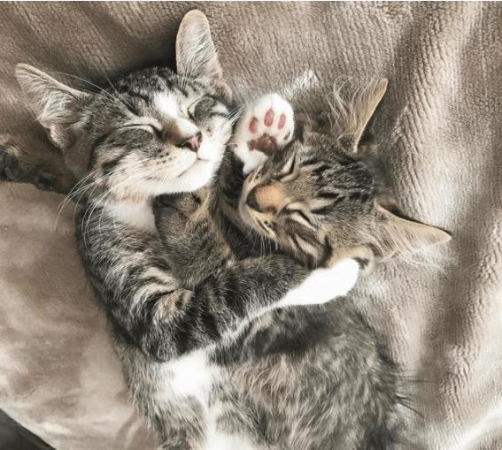 ペットを探していたカップルが、シェルターのサイトで見つけた子猫を引き取りに行ったら、ぴったりと寄り添う兄弟がいた・・・
