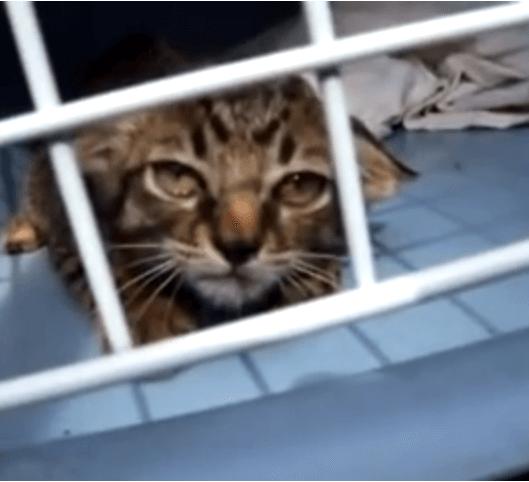 渋滞した道路で車の間を走る子猫を発見!人間に怯えて必死に抵抗する子猫を迎えた仲間たちのいる家