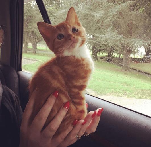 初めて会った私の肩に飛び乗ってきた子猫は永遠に子猫のままだけど、大きな心で周囲を照らす