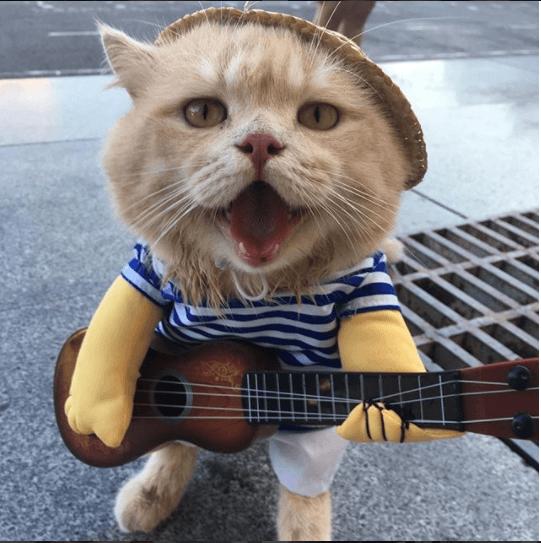 あるときは皇帝、あるときはストリートミュージシャン、その正体は・・・市場の魚屋さんで働く『犬』という名前の看板猫☆