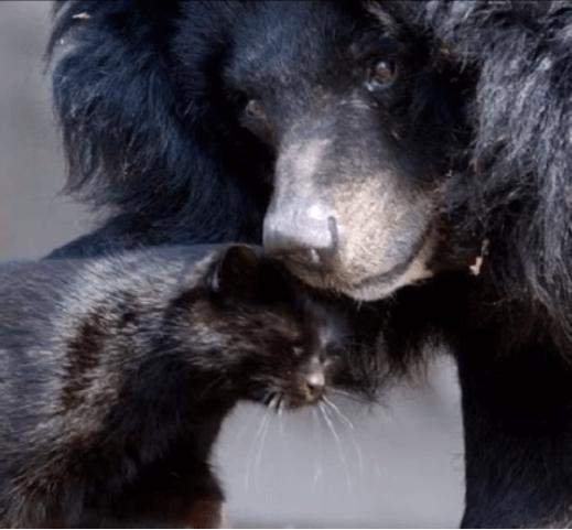 ベルリンの動物園にある日突然現れて、ツキノワグマの親友と彼女が亡くなるまで一緒に暮らしていた黒猫