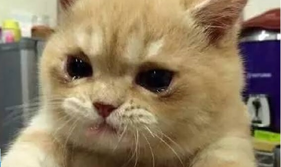 もうたまりません!!どうしちゃったの?飼い主さんの腕の中で涙を流し号泣する猫たち…