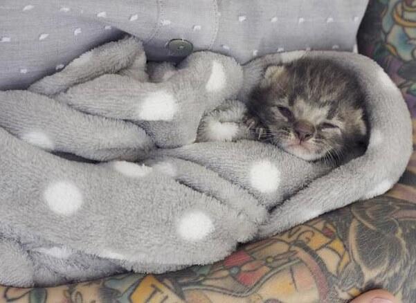ゴミ箱の中から兄弟猫の亡骸とともに発見された瀕死状態の子猫。看病の末、新しい兄弟と出会い幸せに…
