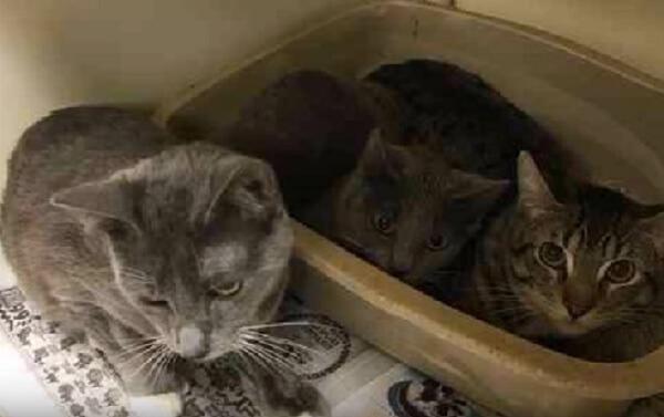 とんでもない異常事態!大量の衣装ケースに生きたまま閉じ込められ捨てられた16匹の猫たち。いったい何が起きた?