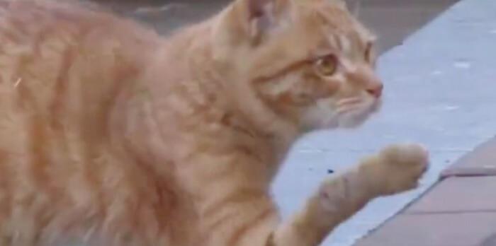厳しい外での環境の中、なぜか肘を使って歩いている野良猫。「ボクを飼って!」心優しい女性に救われると…